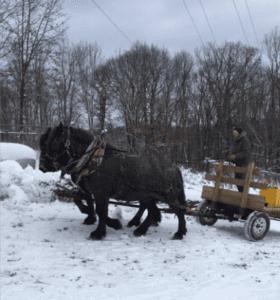 Horsespng